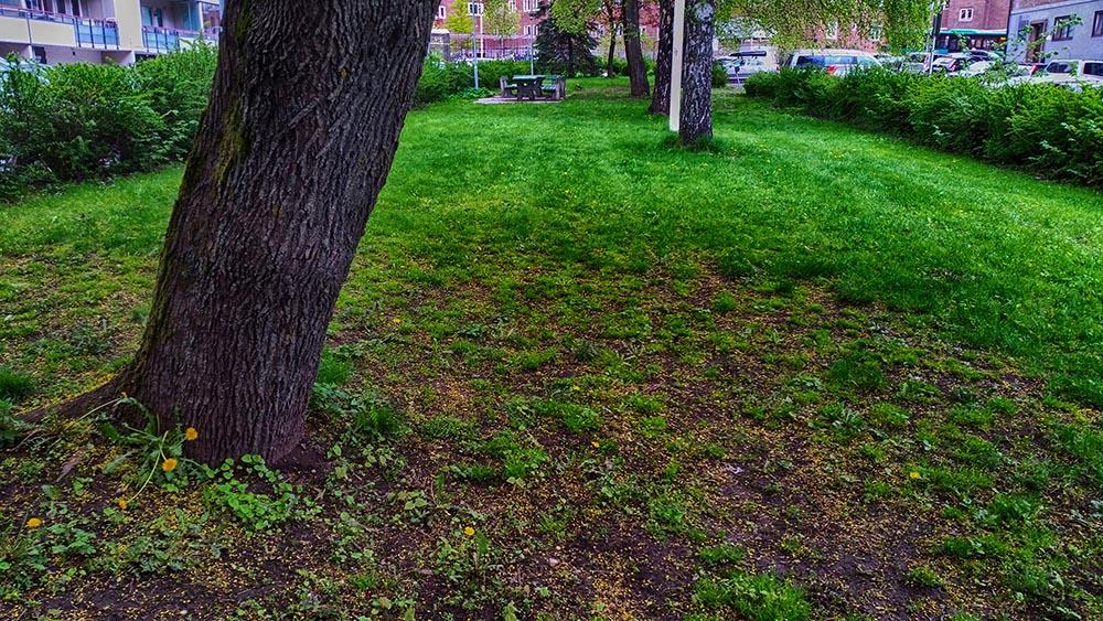 Park på østsiden, 1000px